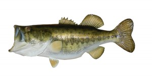 Mexico Bass Fishing