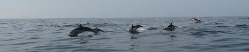 Luna tours and dolphins