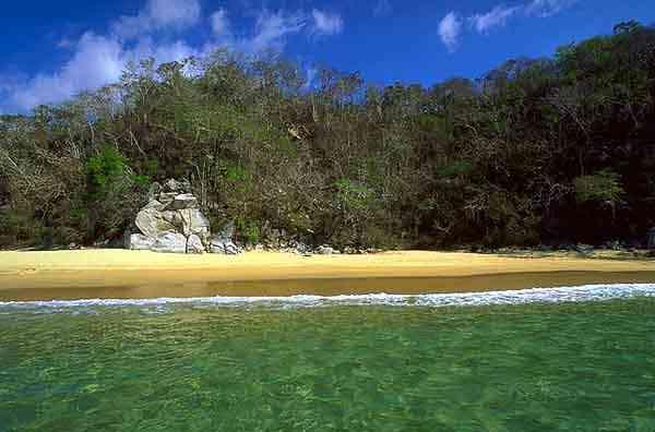 Bahia Maguey